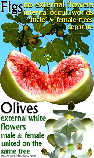 Figs and Olives---Tree of Knowledge and Tree of Life---Symbolic Opposites---medium